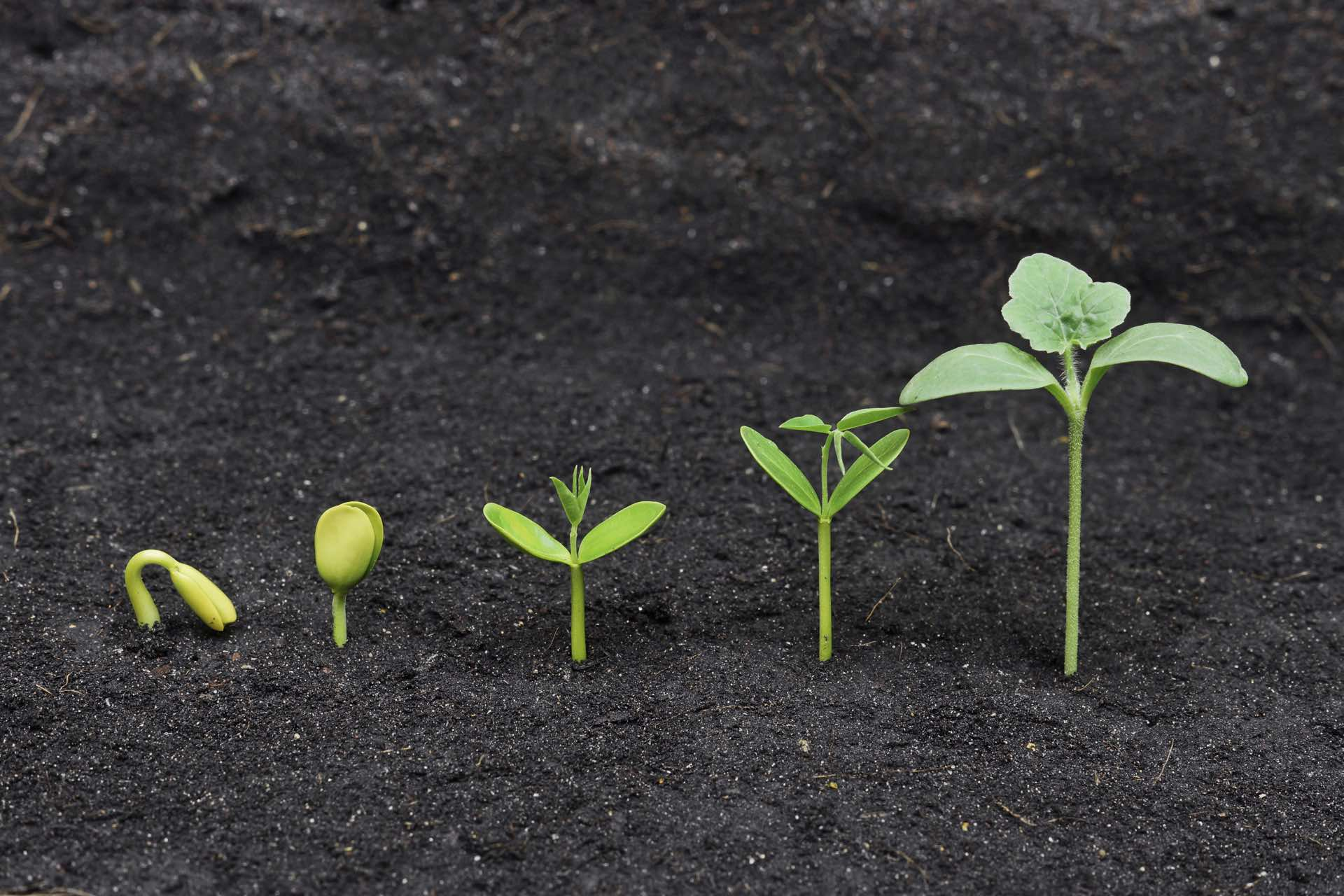 START SMALL & GROW BIG